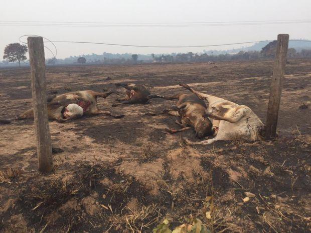 Animais mortos e vegetação destruída: queimadas causam prejuízo ambiental e  desesperam agricultores; fotos e vídeos :: Notícias do Agronegócio -  AgroOlhar